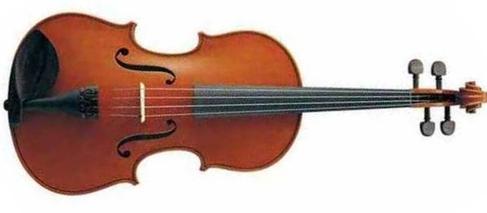 Viola-r
